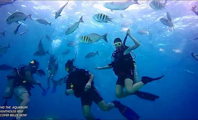Amigos del Mar Dive Certification Course - Introduction to Scuba Diving